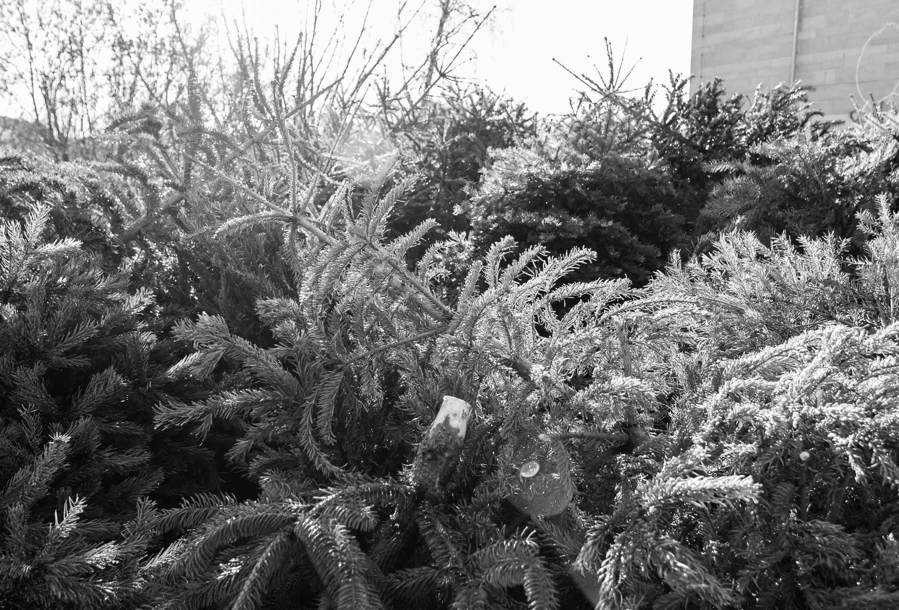 best 28 weihnachtsbaum selber schlagen leipzig. Black Bedroom Furniture Sets. Home Design Ideas